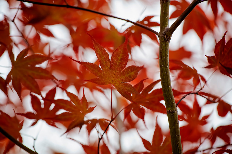 Leaves Growing Old