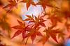 Soft Kiss of Autumn