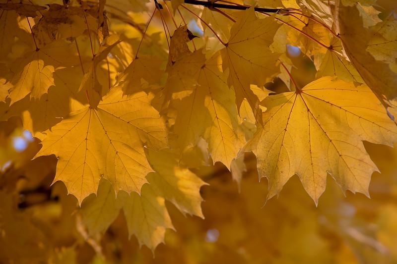 Warming into Autumn