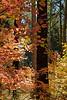 Autumn's Shadow (vertical version)