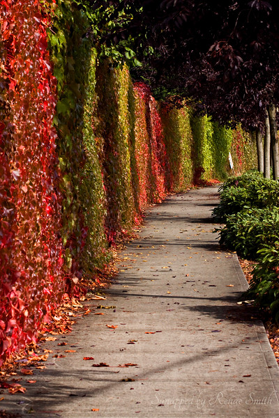 Once Upon an Ivy Walk