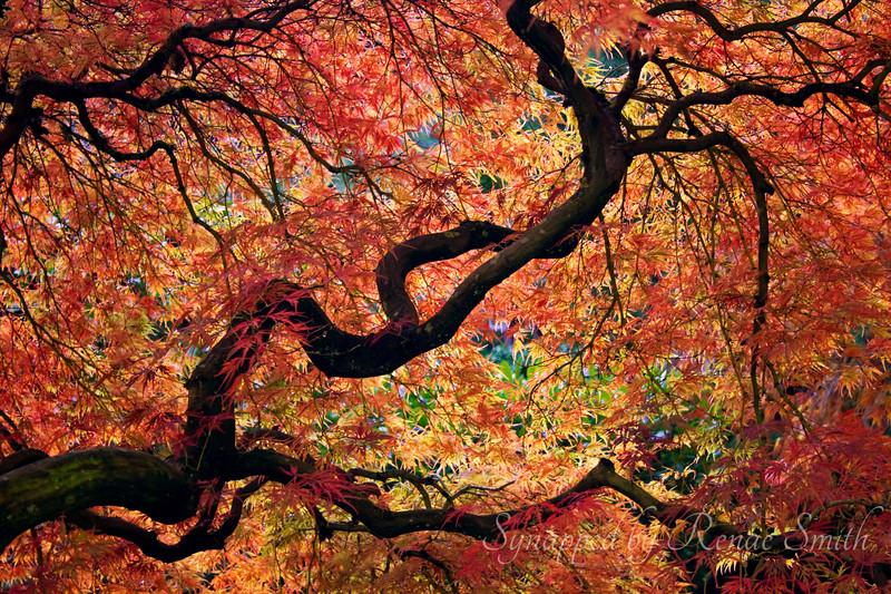 Autumn Burnout
