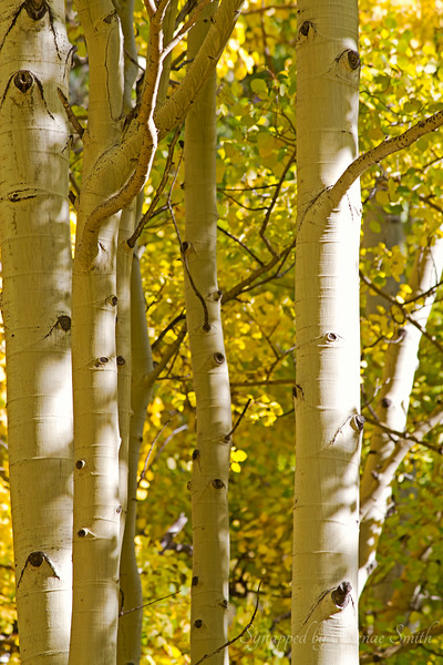 Warmth in the Aspens
