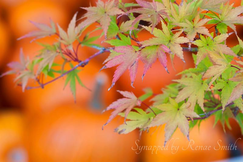 Listening to Autumn's Silence