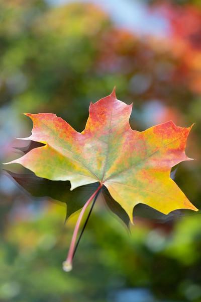 Dancing Autumn (vertical)