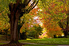 Autumn Street of Dreams