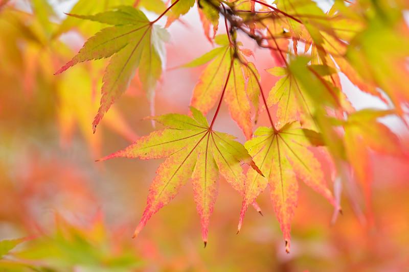 Smiles of Autumn