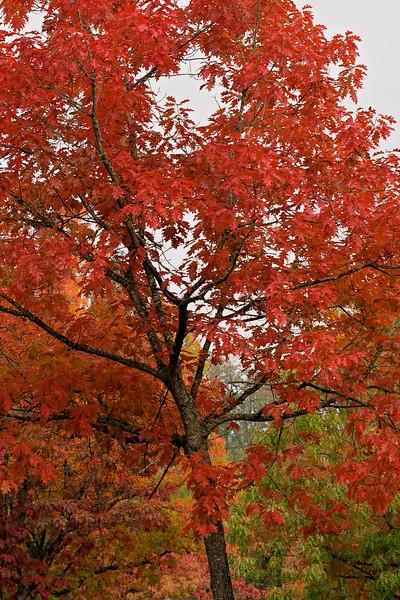 Portrait of Autumn