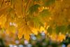 Fall'n Sun