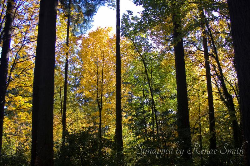 In an Autumn Frame of Heart