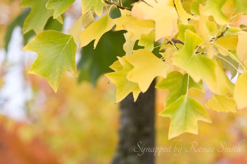 Autumn's Luster