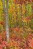 Autumn Melts