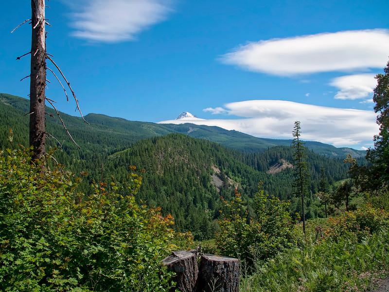 Road to Vista Ridge Trail, Mt. Hood, Oregon