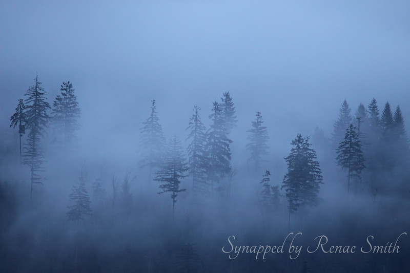 Wrapped in a Blue Fog