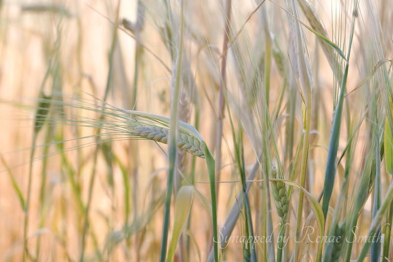 The Harvest, Part 4