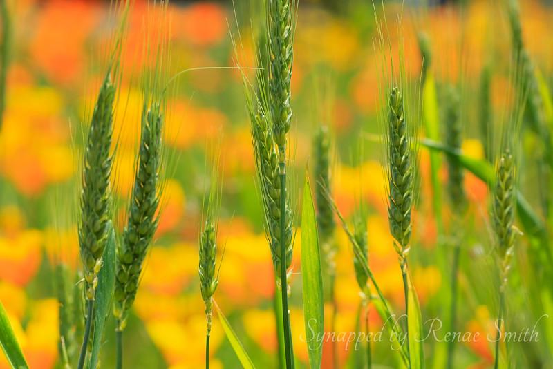 Seeds of Harvest