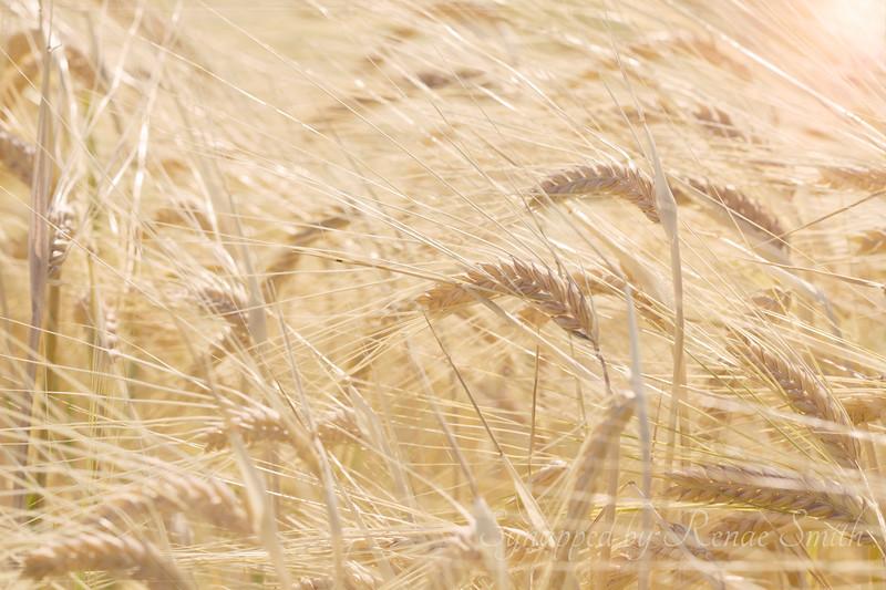 The Harvest, Part 1