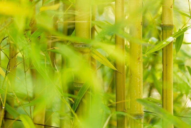 Bamboo Blurs