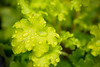 Spring Green IV
