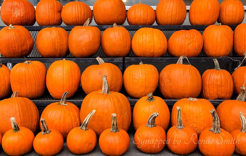 Have Yourself a Merry Little Pumpkin!