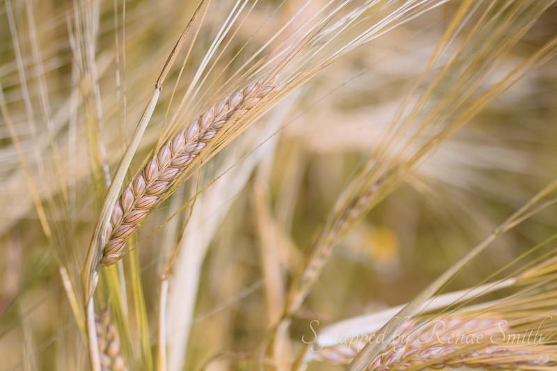 The Harvest, Part 2