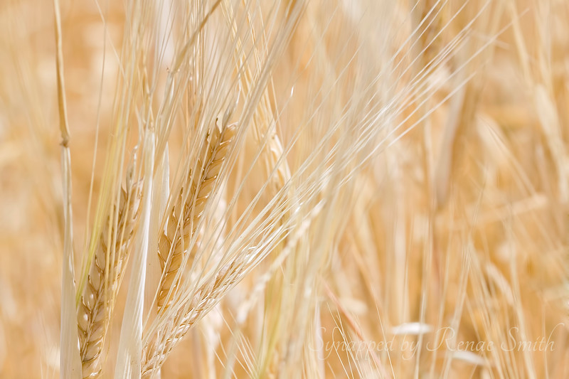 The Harvest, Part 3