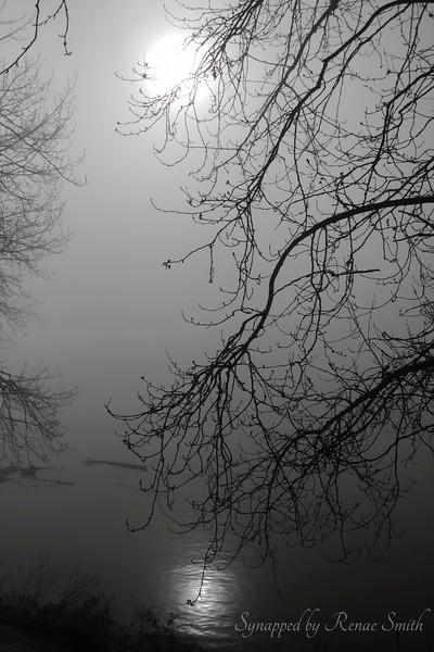 Dispelling the Fog