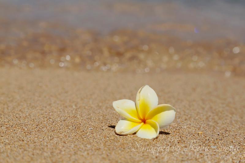 Beach Blossom