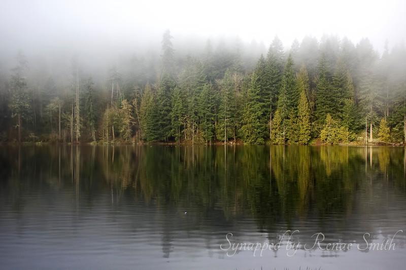 I Dream in Mist-ical Magic
