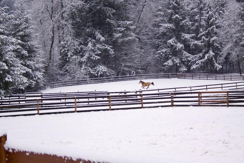 Snow Crazy!