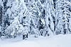 Snow on Snow