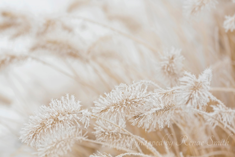 Frosted Details