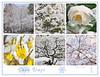 Snow Days Collage