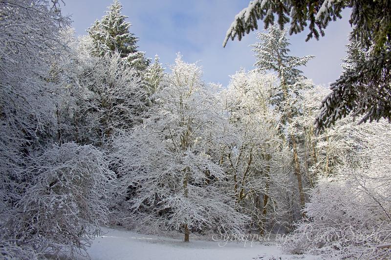 Lost Winter Paradise
