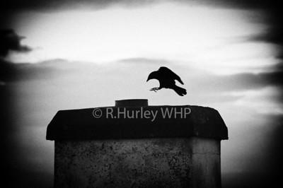 Bird Chimney DSC_2826