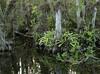 Swampscape