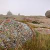 Lichen and Boulders