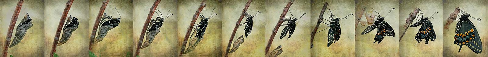 Butterfly Panels
