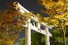 Torii (Shrine Gate) - Hiroshima
