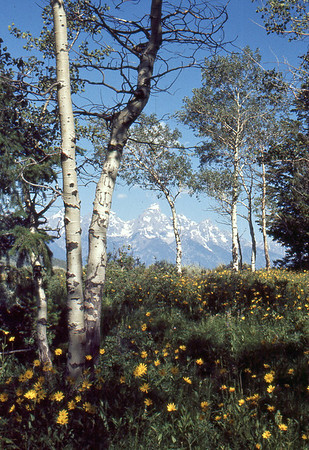 Spring in the Grand Tetons