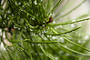 Rain & Pine Needles