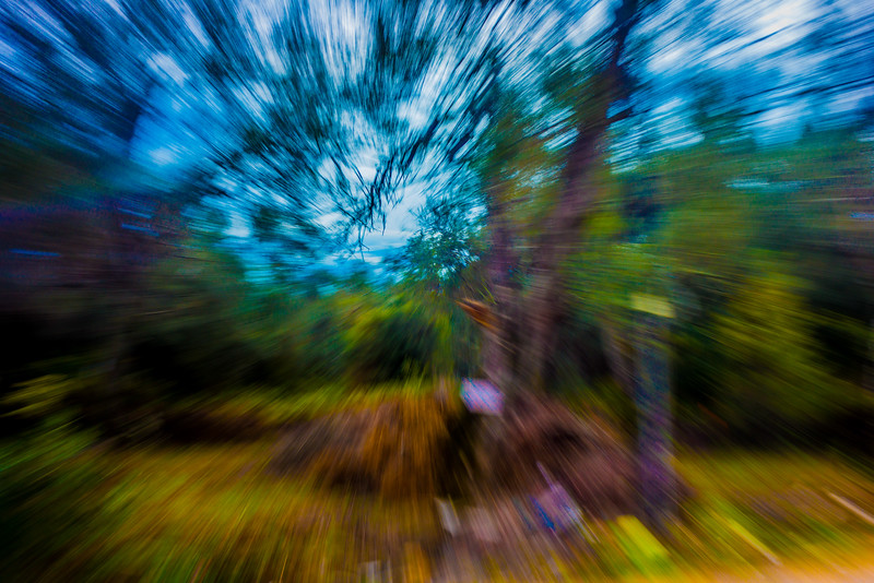 Corfu Forest Zoom