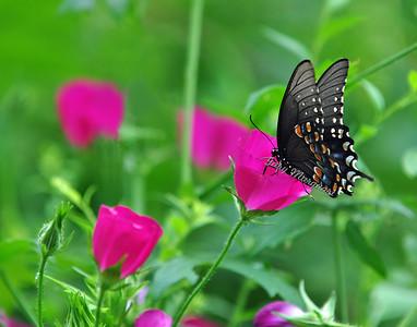 Butterfly 0124