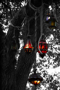 Selective colored lanterns hung on a tree near the Convention Center on I-Drive in Orlando, FL.