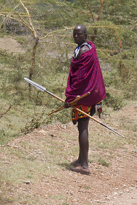 Massai warrior on watch for a rouge lion near his village in the Rift Valley near Nairobi, Kenya. Sept 2011