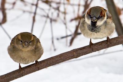 Birds on a twig in Central Park Manhattan, New York.