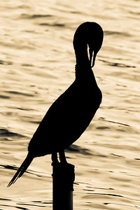 Crane silhouette at sunset by Lake Eola in downtown Orlando, Florida.
