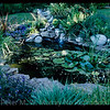 2002  POND AND STREAM IN JUNE