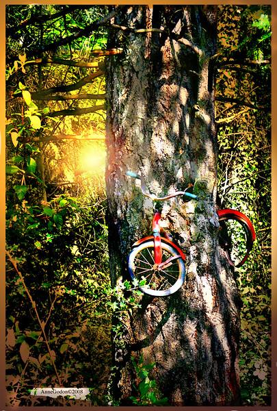 bikeintreeversion5