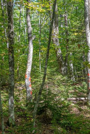 Woodland and Wildlands in Action